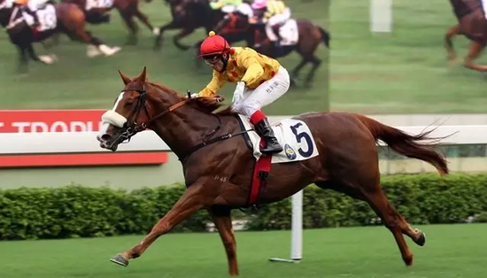 人与马的合一是马术的至高境地
