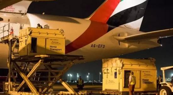 飞机抵达里约热内卢后,正在卸马