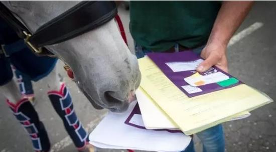 每匹马有自己的护照,身上必须要有芯片也必须要有出口检疫证明