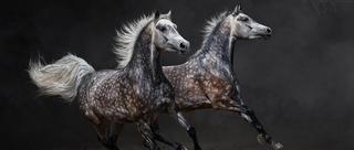 辽阔旷野马儿绝美身影