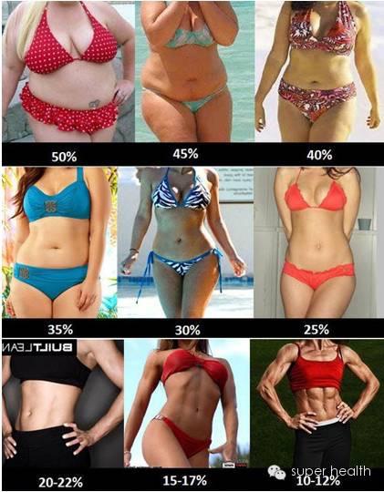 26 率 体 女性 脂肪