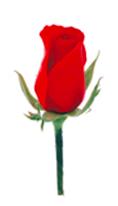 官方吉祥花:红玫瑰