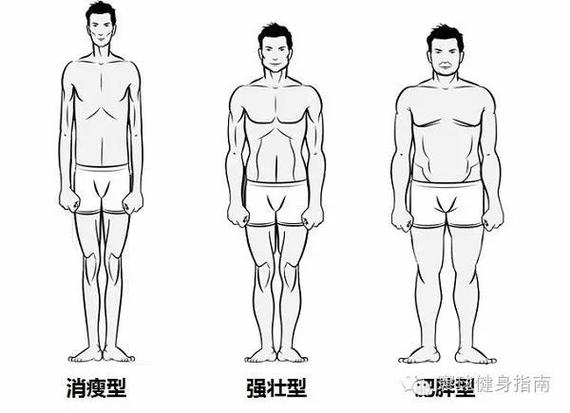 三种人体形态