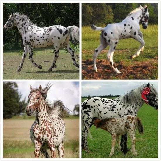 动物马全身微信头像