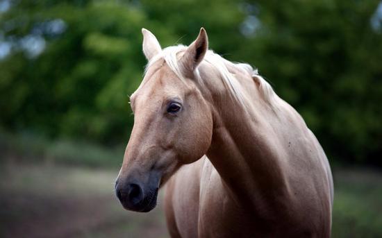 爱马人士看过来!你必须知道的马儿生理健康小科普