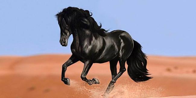 骏马奔腾-horse 习语知多少 西方马文化背后的有趣故事