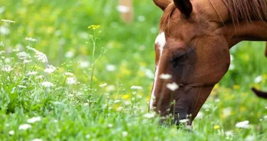 春天该如何打理马匹?护理方式依马儿状况择优