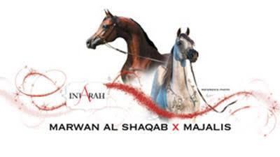 精液来自世界最优秀阿拉伯马种公Marwan Al Shaqab,卵子来自世界冠军母马Majalis