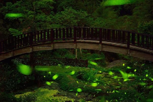 夜晚萤火虫之旅犹如爱丽丝仙境