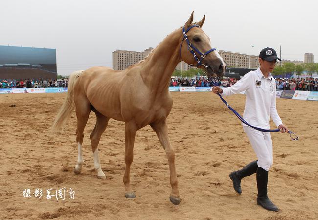 优良马匹展示