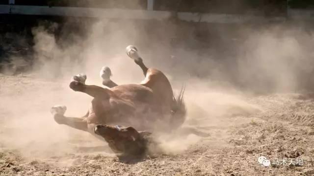 马在地上打滚