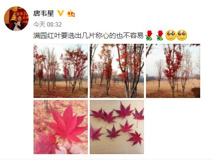 唐韦星赛前发微博,寻找称心枫叶