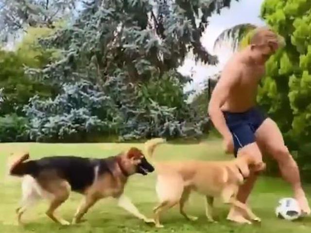 """视频-尤文妖卫带球遛狗 把两只爱犬逼""""内讧"""""""