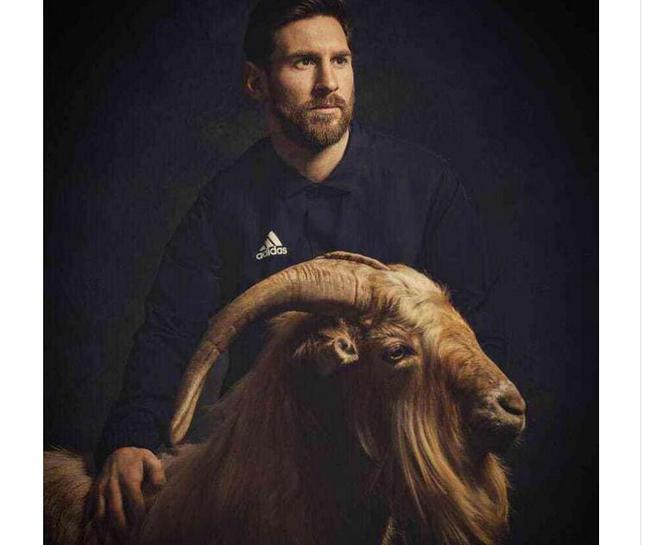 梅西与山羊摆拍