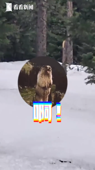 不要背对猛兽! 美国男子倒走1公里摆脱黑熊