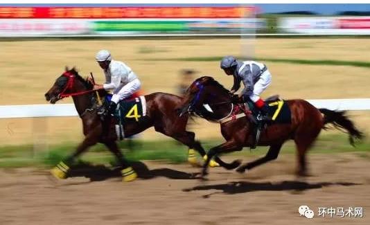 奔跑吧,骏马!——2019内蒙古速度赛马大奖赛总决赛侧记