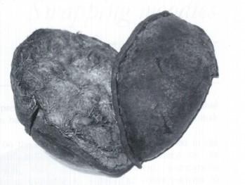 1984年荷兰发现的考儿夫毛发球