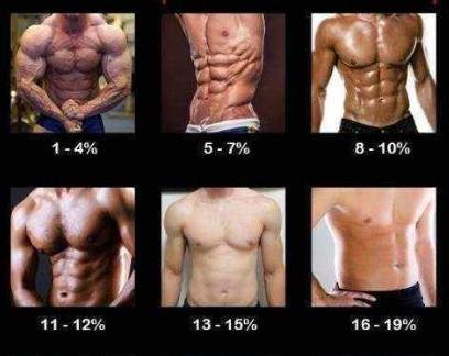 不同體脂率的肌肉