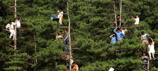 延边的上树球迷故事为人津津乐道
