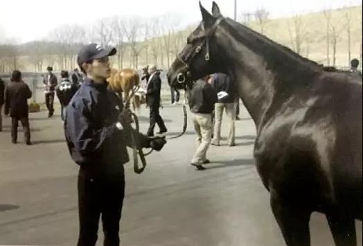 如照片所示,手持有余的缰绳,与马保持肯定距离。
