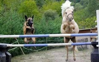 汪星人与马儿之间的奇妙友谊