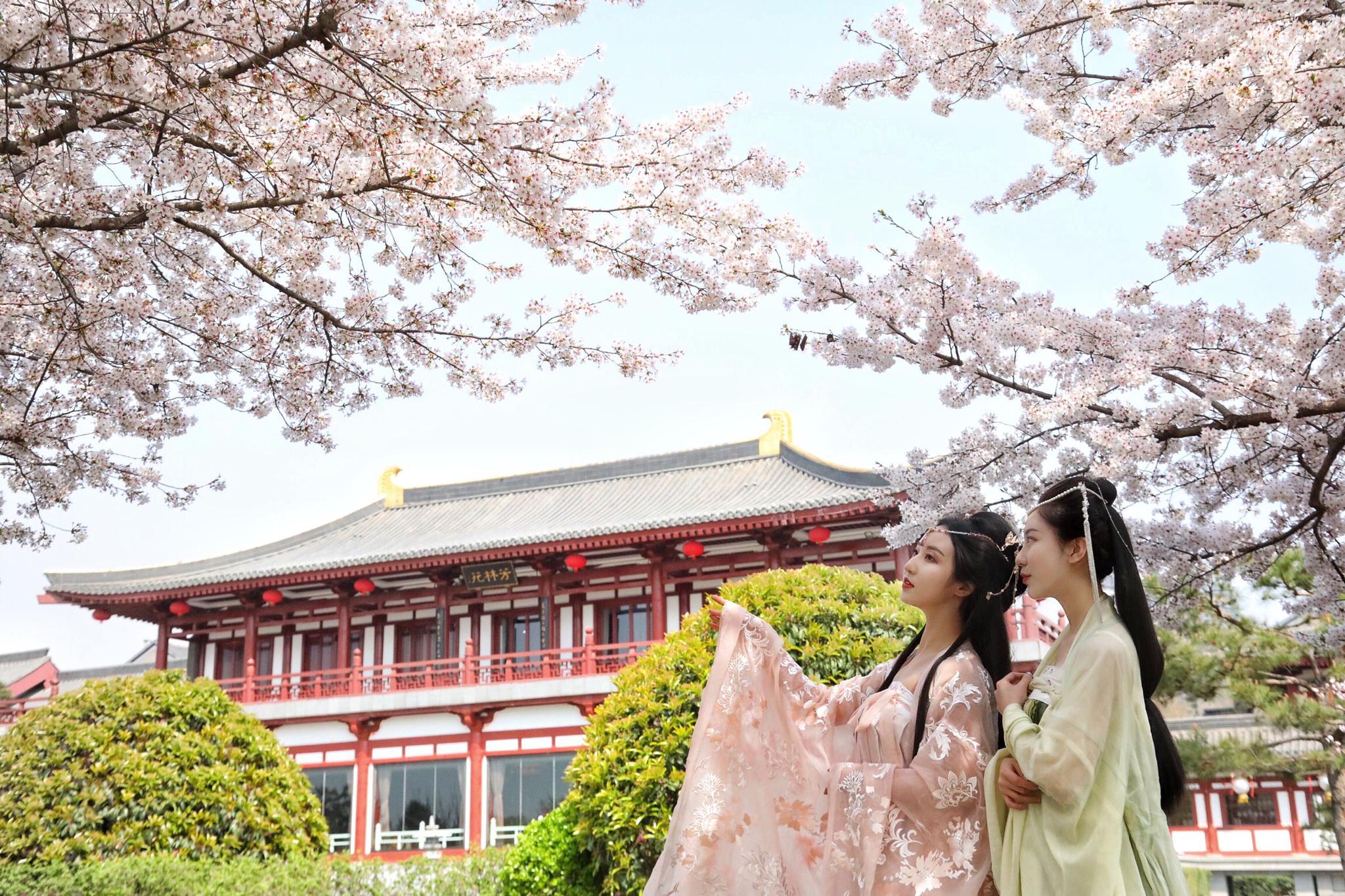 #西安赏花季#大美曲江