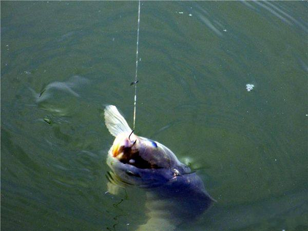 台钓的饵料重要性与钓法漫谈