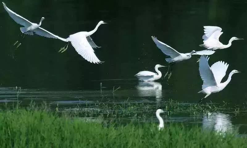 保护秦岭   在大西安东部,让清脆的鸟鸣唤起你美好的一天