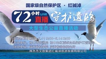 中国首次72小时直播守护遗鸥