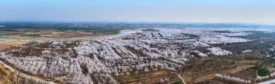归田园兮·采杏泾河畔—太平镇欢迎您!!