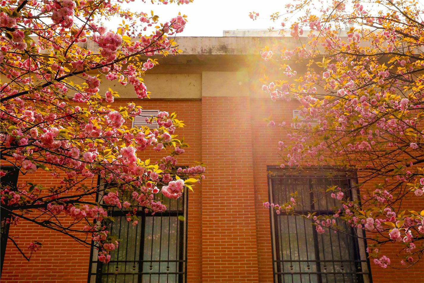 校园春景没有最美只有更美