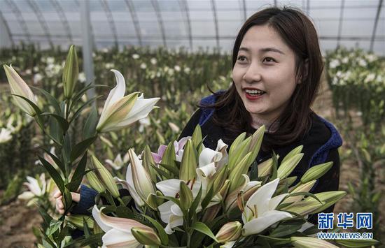 10月19日,一名顾客在惠民惠农专业合作社大棚里选购花卉。