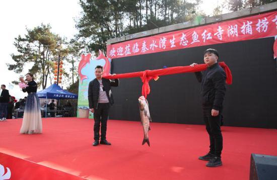 """1条鱼8800元!""""秦水湾""""生态鱼首网4.5万斤售罄"""