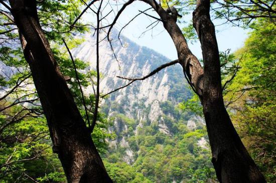 山高、林密、石滑、坡陡,算是今天爬山的特点了。