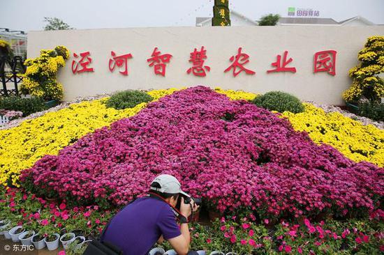 泾河新城第三届郁金香花展将于3月28日在泾河智慧农业园盛大开