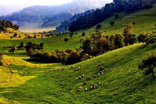 关山草原。