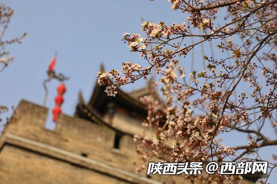 西安好时光 市民出游赏花忙:这才是春天的样子