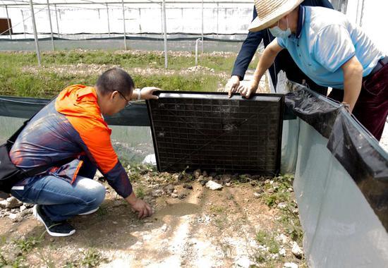 工人们在察看幼苗长势。周泽华 摄