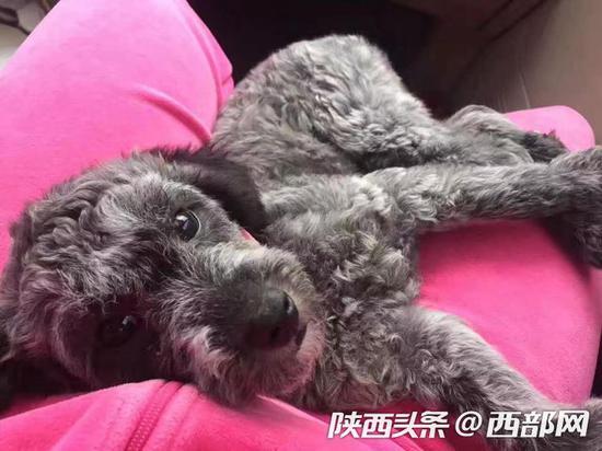 李先生家的狗因为拉肚子住院,四天就花费了2000多元。