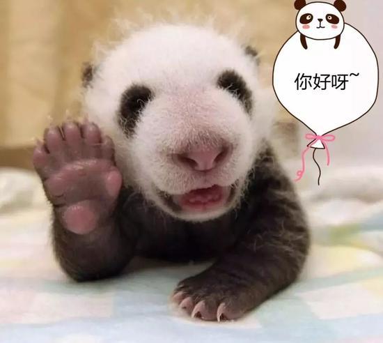 提起国宝大熊猫