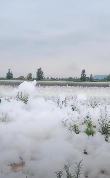 石头河下游漂浮大量白色泡沫。网友视频截图