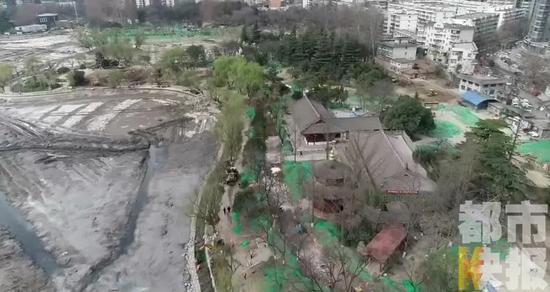 兴庆公园多棵大树被砍伐 园方回应了