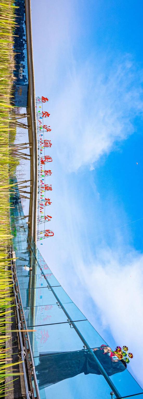 雁鸣柳绿、湿地花开、梦幻彩虹桥 浐灞的美定制不限量!
