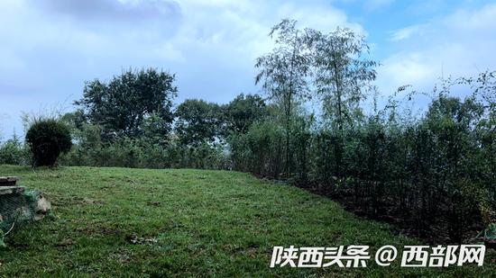 荷兰植被 人口_南渡江 最美支流 三十六曲溪湿地