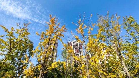 在能源金贸区,与秋天撞个满怀