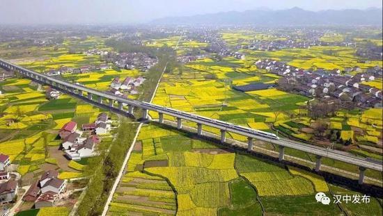 2019中国最美油菜花海汉中旅游文化节将于3月15日开幕