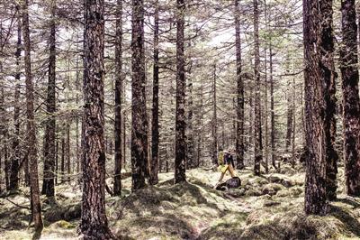 秦岭原始森林地貌