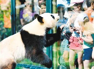 秦岭大熊猫系大熊猫新亚种