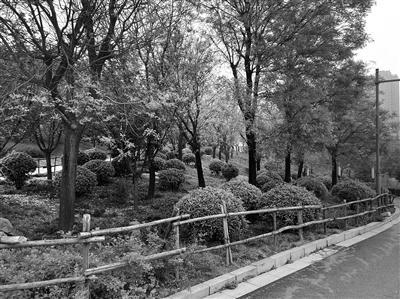 清凉山森林公园透绿栅栏