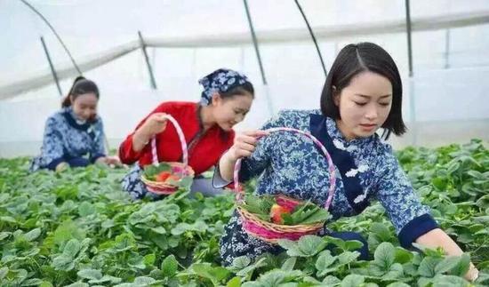 2019年西安高新区草莓评优大赛